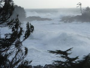 Brave the wild in Ucluelet!