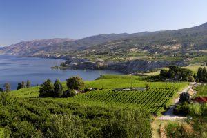 Naramata Bench wine region in the Okanagan