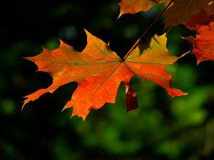 Fabulous Fall!